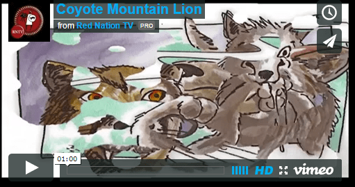 Coyote Mountain Lion